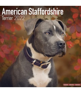 American Staffordshire terrier 2022